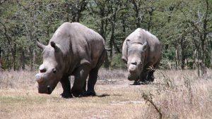 Kenya Honeymoon Ol Pejeta