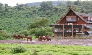 Aberdares National Park The Ark Lodge