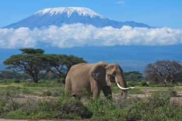 3 days Amboseli safari affordable