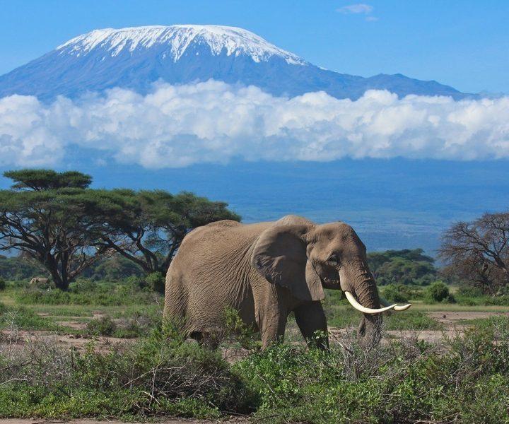 3 days Amboseli safari affordable