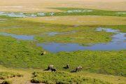 Amboseli national park swamp