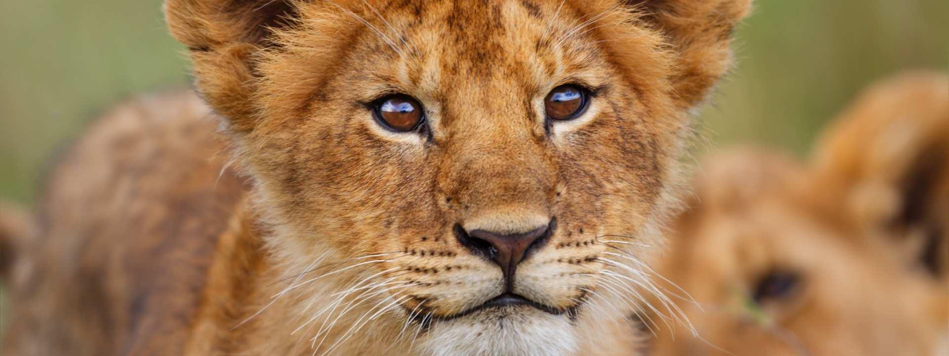 Kenya National Parks, Game Reserves & Attractions