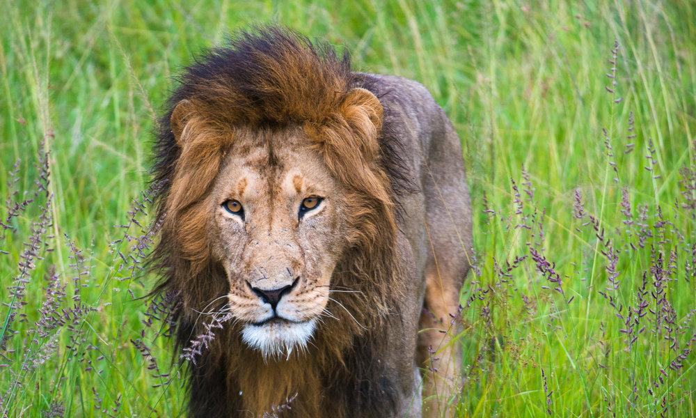 12 days Kenya Tanzania Safari
