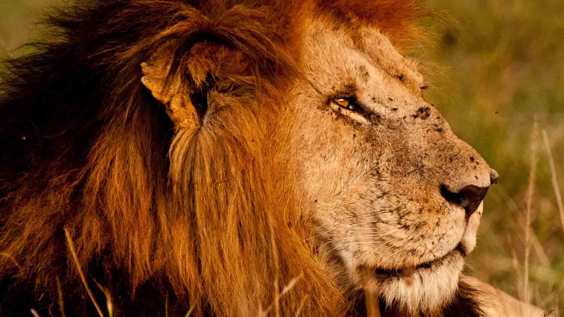 5 Days Classic Lodge Kenya Safari