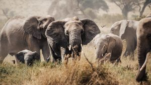 3 days kenya luxury safari amboseli