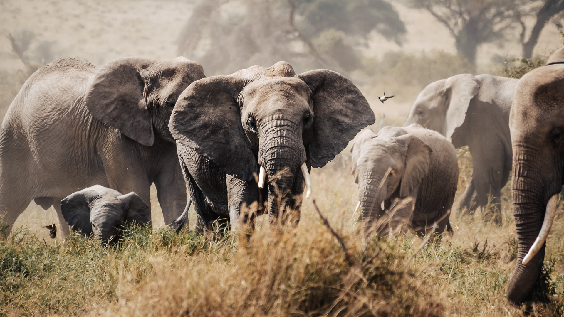 3 Days Kenya Luxury Safari to Amboseli National Park
