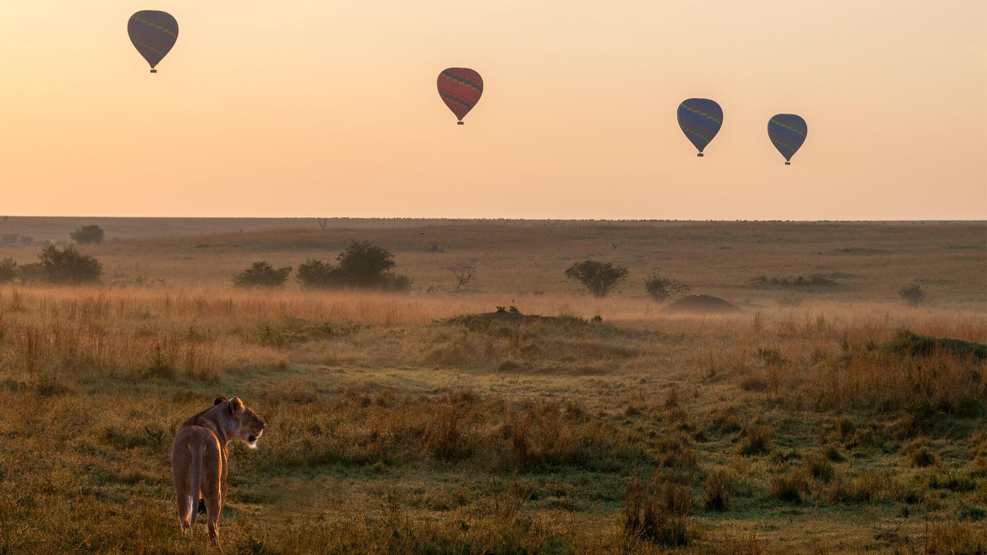 Hot Air Balloon Safari in Masai Mara, Kenya and FAQ