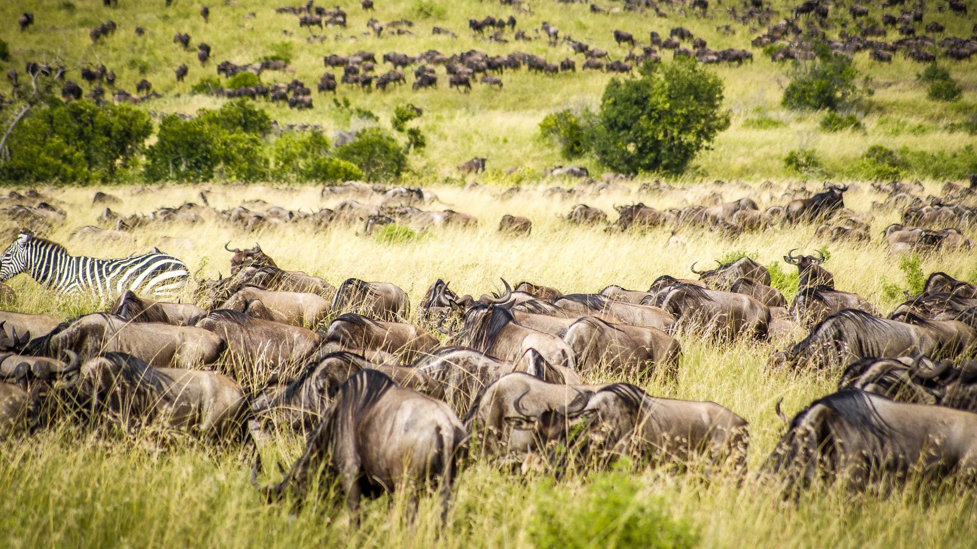 03 Days Lodge Safari in Masai Mara – Affordable
