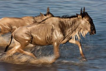 5 Days wildlife safari in Kenya
