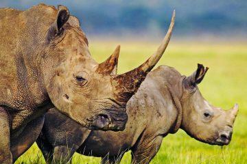 4 Days Kenya Safari