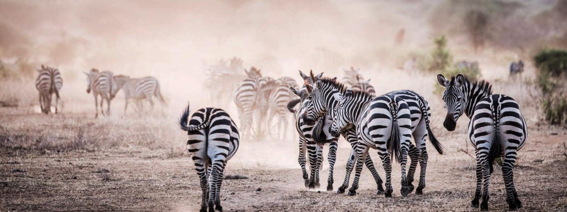 FAQs Kenya Safari | Kenya Safari Facts