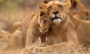 3 days Masai Mara safari lodge