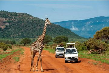 3 days Mombasa safari Tsavo