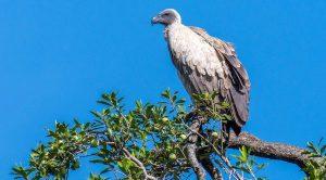 Birding Kenya safari