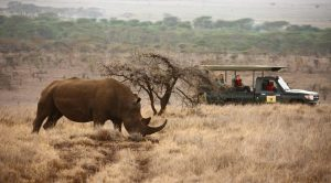 Lewa Conservancy RhinoSafari