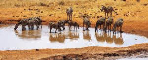 2 days safari from Mombasa to Salt Lick