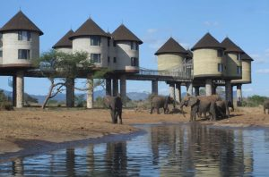 2 days Mombasa Safari Salt Lick