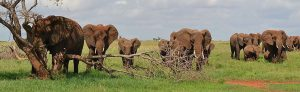 2 days safari mombasa salt lick