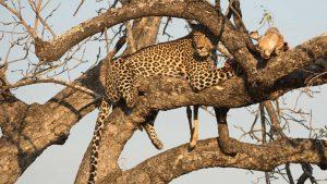 3 days safari Tsavo from Mombasa