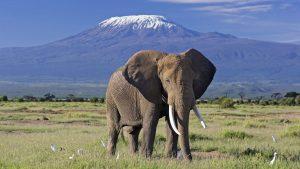 4 days safari East West Amboseli