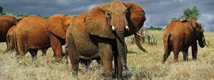 Mombasa safari tours