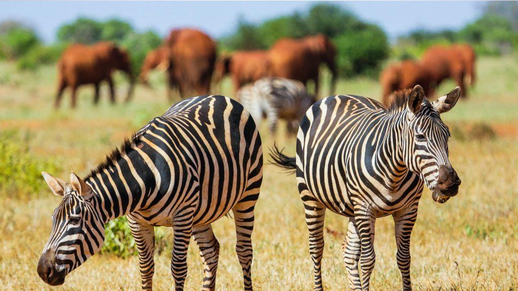 Short safari starting from Mombasa