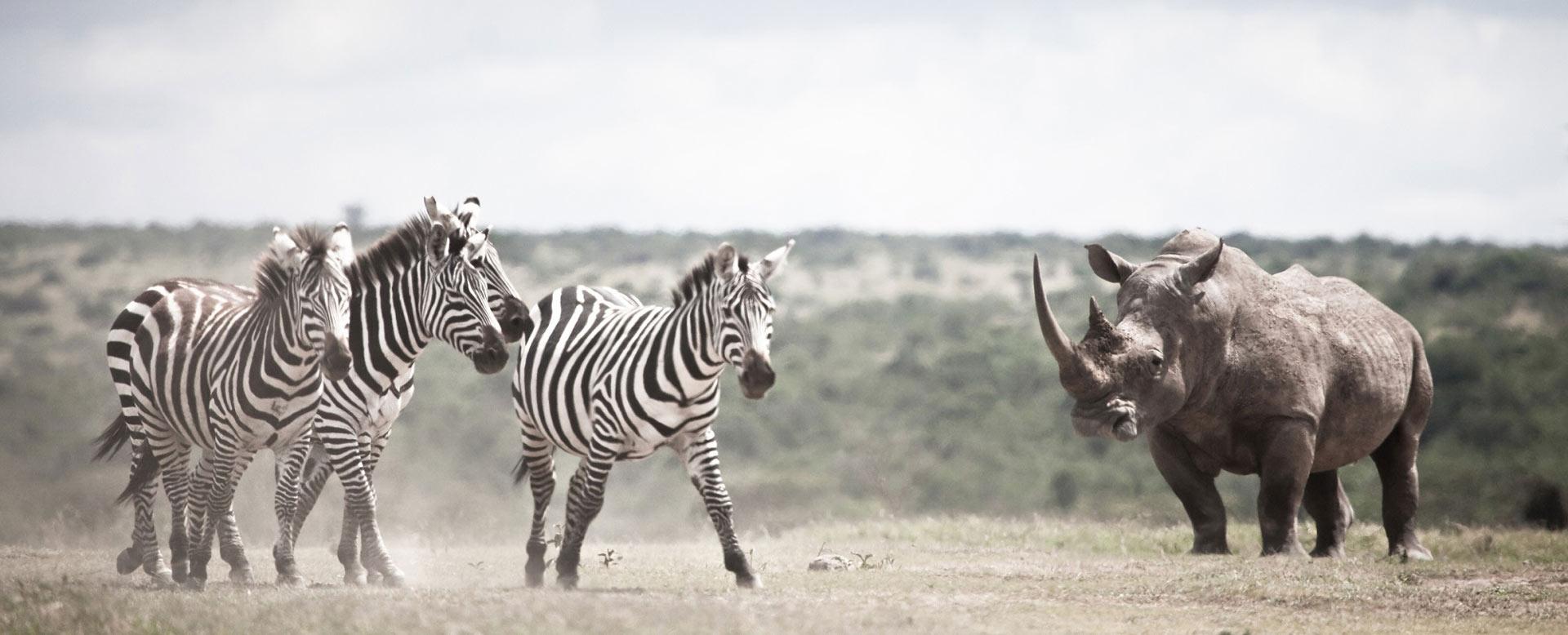 Solio Game Reserve, Kenya
