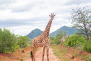 2 day safari mombasa ngutuni salt lick