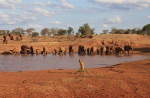 Elephants Taita hills Ngutuni safari Mombasa