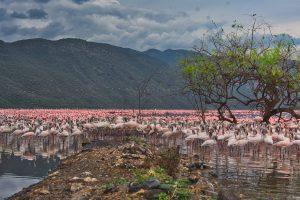 Lake Bogoria Flamingos