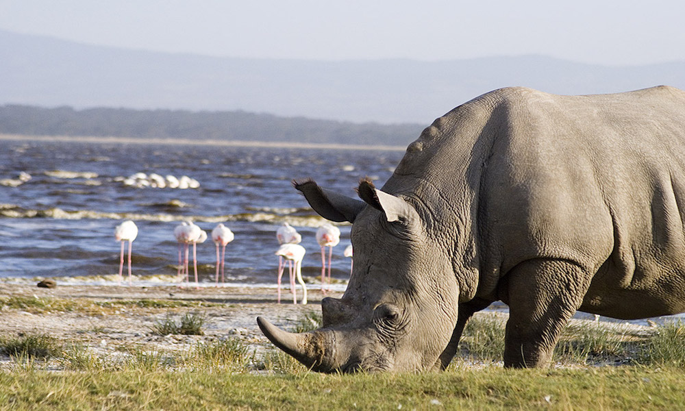 Lake Nakuru National Park White Rhino