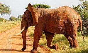 Tsavo East National Park Wildlife