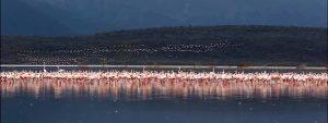 Lake Bogoria Kenya