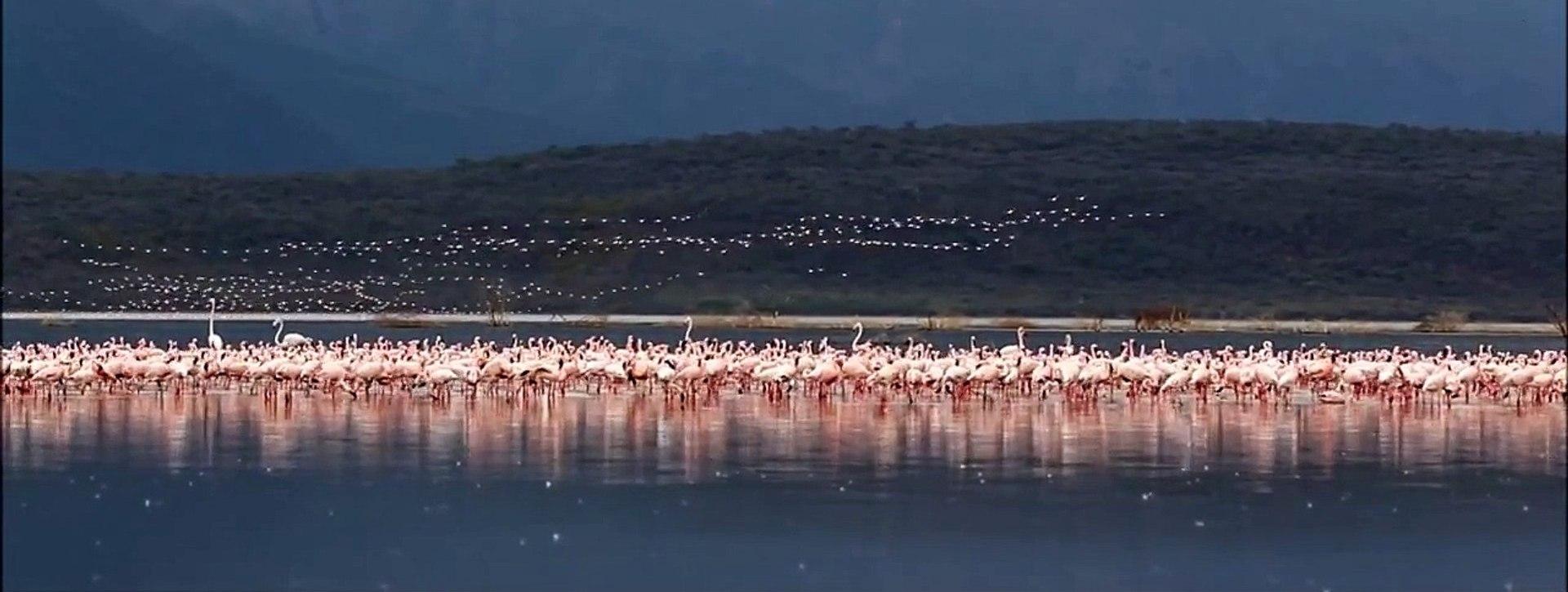 Lake Bogoria Safari, Kenya