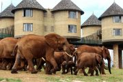 3 Day Mombasa Safari Taita Hills