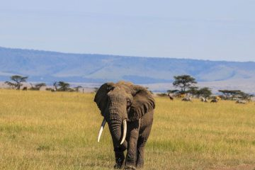 4 day safari Mombasa