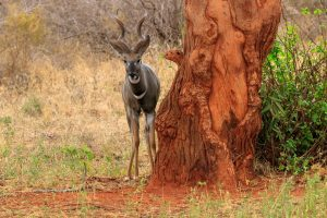 4 days safari mombasa