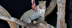 4 days Mombasa safari