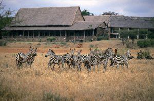 4 days safari from mombasa