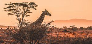 Safari from Mombasa