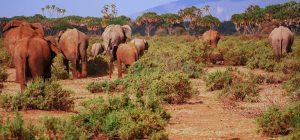 Safaris from Mombasa