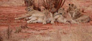 safari from Mombasa Kenya