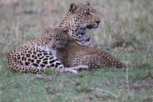 5 day safari Kenya