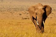 5 days Kenya Lodge safari