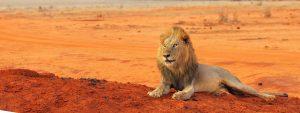 Safari Tours Starting from Diani Beach