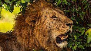 2 days safari from Mombasa East West Tsavo