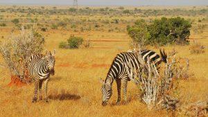 2 days safari from mombasa Tsavo East