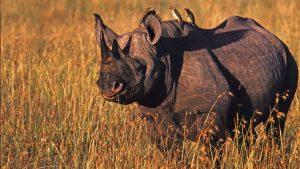 3 days safari from Mombasa Tsavo East west