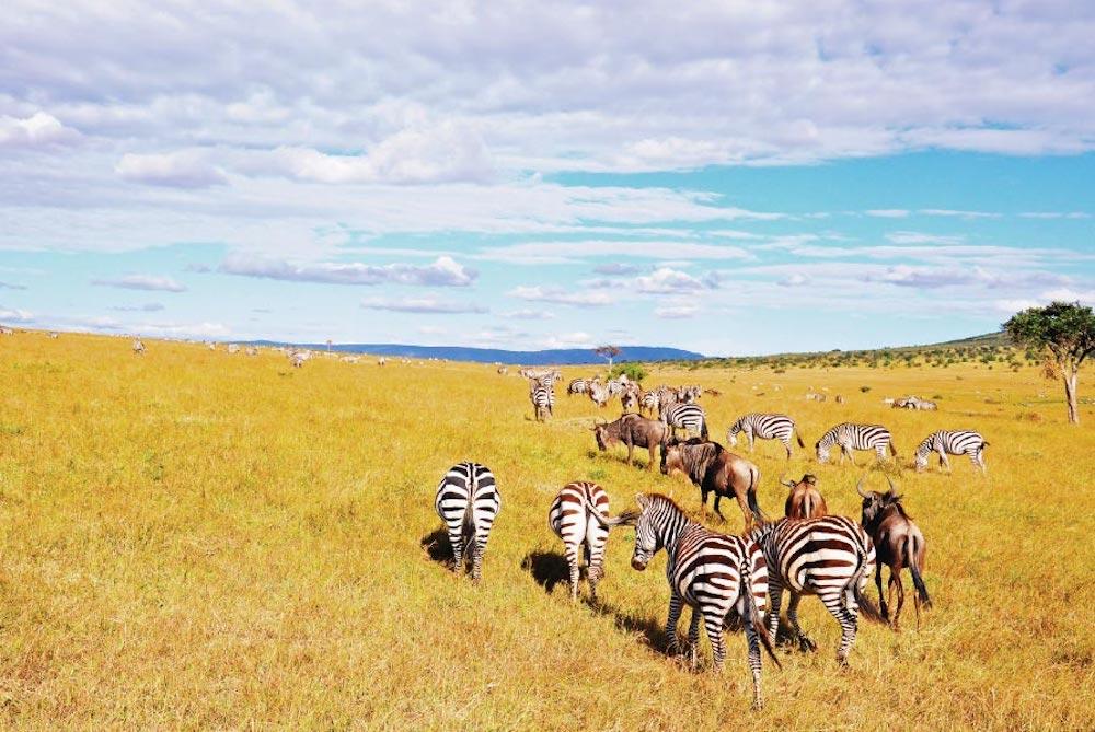3 days Masai Mara Safari midrange